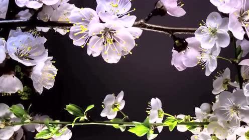 分享一个非常美的花朵延时摄影短片 各种美丽花朵的盛开过程