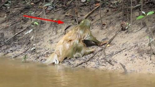 河中发现长毛怪物,行动缓慢有气无力,村民:这是水鬼!