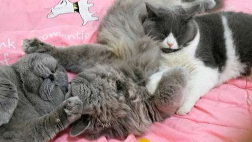 几只胖猫在主人床上睡觉,怎么叫都不醒,主人说了三个字立刻清醒