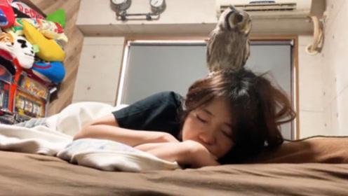 女主人赖床不肯起,猫头鹰着急得去叫主人起床,场面笑翻了