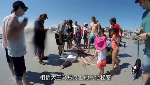 地球上最大乌贼,重达400公斤,吃货:做成海鲜肯定贼过瘾!