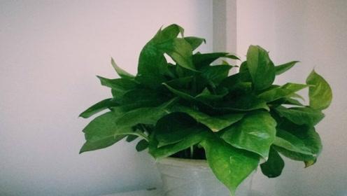 花盆里倒一碗,土壤不板结,立马松软透气,根壮叶绿长势更旺
