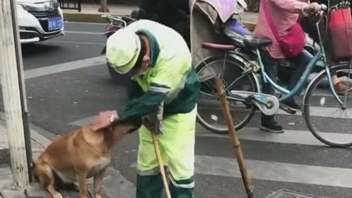 金毛陪主人一起打扫卫生,真是个懂事的狗狗,太暖心了