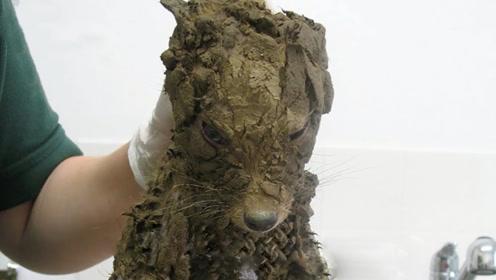 """男子野外捡到""""泥狗"""",洗干净后却懵了:这根本不是狗"""