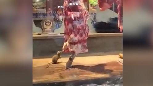 广东一火锅店橱窗内牛肉遭老鼠肆意啃食  市场监管局:已查封该店