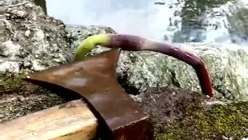 这是一种什么植物,居然还会自己逃跑?网友:植物也成精了?