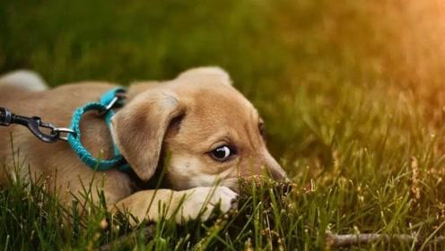 懒人是如何遛狗的,狗子:我为你的快乐做出了多大的牺牲