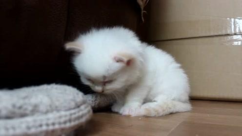 打瞌睡的小猫咪,网友:这不就是上数学课的我吗?