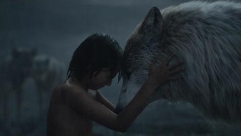 狼遇到人类的婴儿,真的会将孩子抚养长大吗?专家:吃的更开心!