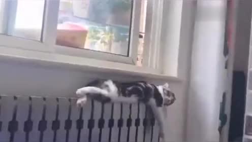 猫咪你这妖娆的睡姿