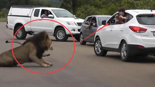 男子作死把头伸出车外,给狮子拍照,镜头记录惊险一刻