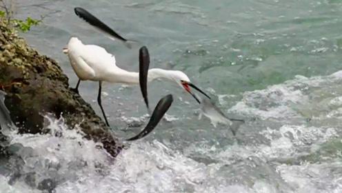 鱼跳起来,白鹭守在那里