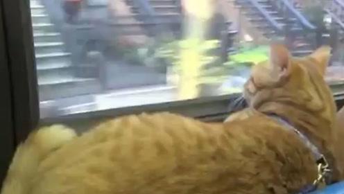 猫咪无间断时间风雨无阻的坐公交车,背后原因让人泪目