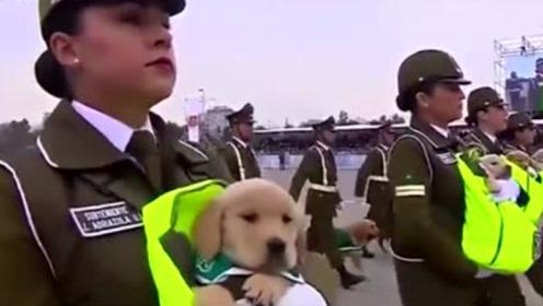 军犬退役了都去哪里?处理方法让人心疼,看完瞬间眼眶红了