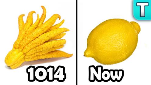 太意外了!万万没想到,1000年前的柠檬居然长这样?