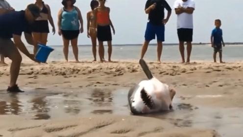 一条小鲨鱼被海浪带到了沙滩上,游客们不顾危险热心救助,太幸运了