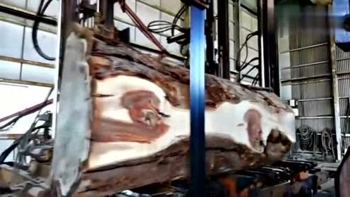 用机器锯开上百年的老树表皮,网友:里面的纹路真漂亮!
