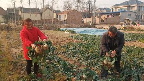 天气越冷越想吃的菜,农村媳妇说腌着最好吃,看看你的家乡有吗