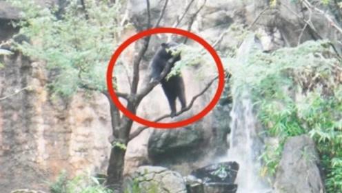贵州发现消失近40年的生物,能像人一样直立行走,中国少见!