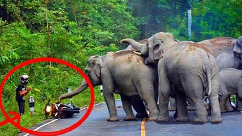 美女野外开车,一头大象跑过来,吓得美女从车上跳下来!