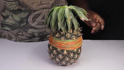把1000根橡皮筋套在菠萝上,菠萝能承受住吗?结果让人想不到!