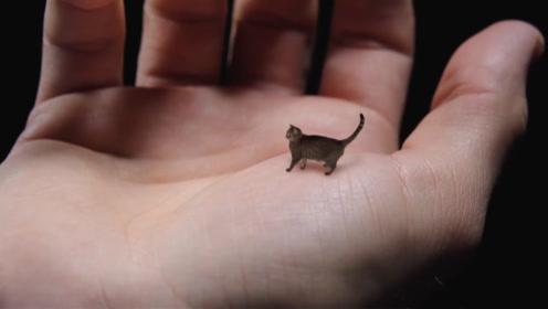 这只猫咪体长仅有7厘米,体重不足3斤,只活到6岁