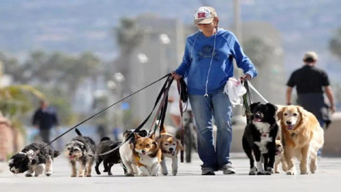 为什么女性更喜欢养公狗?这个原因很重要,看完长知识了