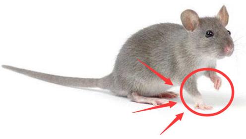 """属鼠人:12月上旬还有一""""难"""",一般人难以忍受,躲过了福大命大!"""