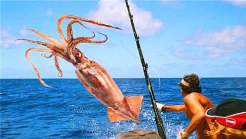 为啥鱿鱼遇见人类落水,会将其往深海拖呢?看完长见识了