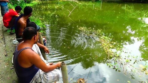 一片绿油油的池塘里,农村大叔们钓鱼,看看钓了什么鱼