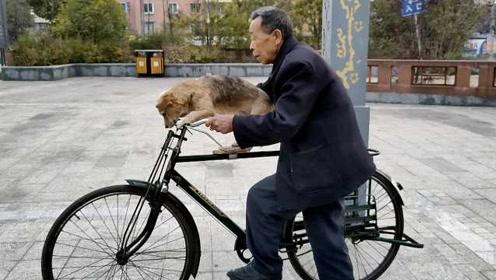 小狗坐自行车设专属小板凳,大爷宠溺为它刮胡子洗脸脚