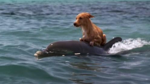 海豚和狗的特殊友谊,你见过狗和海豚交朋友吗?太感人了