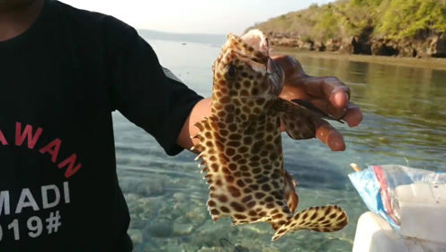 放在海边的透明渔网,捉到了两条石斑鱼!