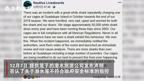 墨西哥一珍稀白鲨头部被潜水笼卡住,挣扎25分钟惨死在游客眼前