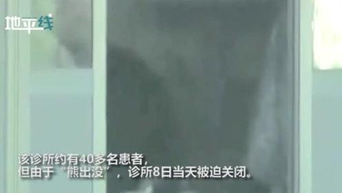 日本熊母子躺在一家医院内被发现 网友:冬眠?带了医保卡了吗
