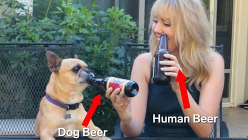 英国生产狗狗专属啤酒,狗狗沾嘴停不下来,敢和汪星人对瓶吹?