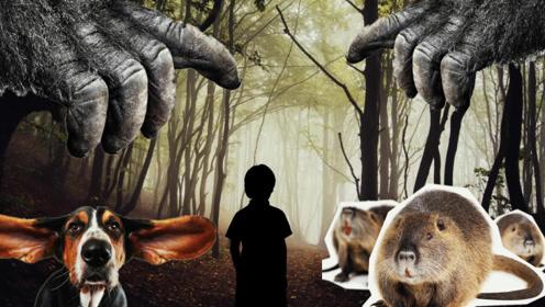 小男孩为什么会独自行走在黑暗森林里呢?书适优阅科普知识,英语学习