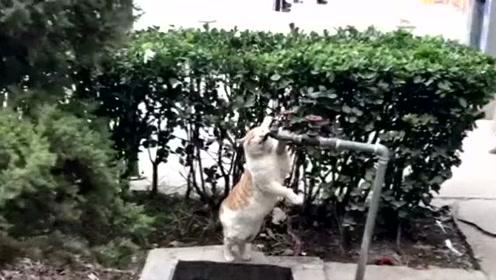 好想给我家猫看看,人家的猫活的多么艰难。