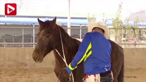 拉风!这位老爸每周带孩子骑汗血宝马放学