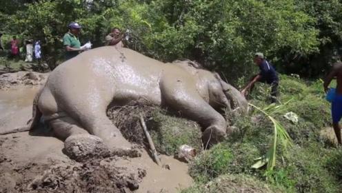 """为什么大象死后,尸体不能碰?小伙不听劝,这下""""凉凉""""了!"""