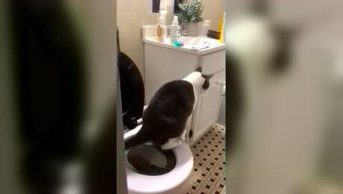 这个猫咪真是聪明