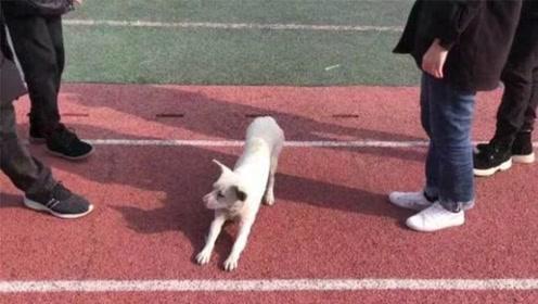 四驱稳胜两驱!学生400米体测 第一名竟是流浪狗