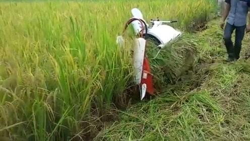 小型水稻收割机,农村又一大发明,谁见过?