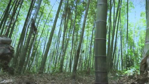 《勇士》主题曲《不息之河》剧情版MV