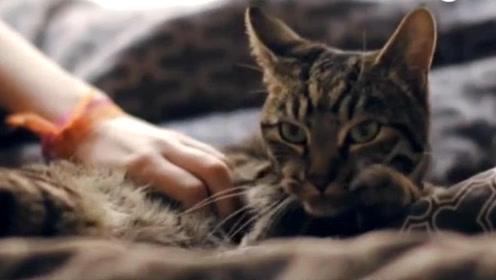 国外做了一个猫咪指南,原来在猫眼中,人类其实是他们的宠物