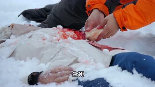 赵又廷的南极日记:贼鸥和海豹