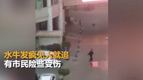 """惊魂!""""牛魔王""""发疯闯进医院 失控冲撞市民"""