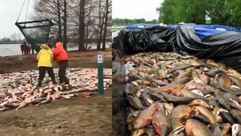美国人捕获4.7万条亚洲鲤鱼不会吃 准备直接填埋