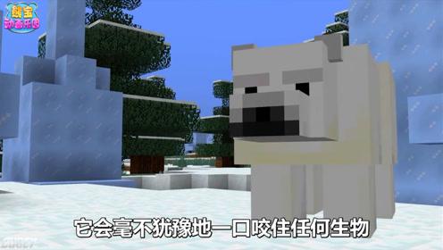我的世界北极熊大揭秘 不要欺负小熊崽哦