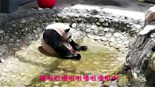 大熊猫洗澡的视频,配上这首超级可爱的《洗澡歌》心都萌化了